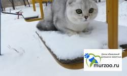 Котик в разведение