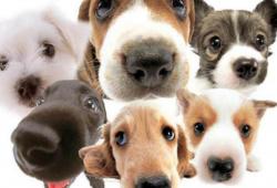 Доска объявлений о продаже животных в доска объявлений калмыкии