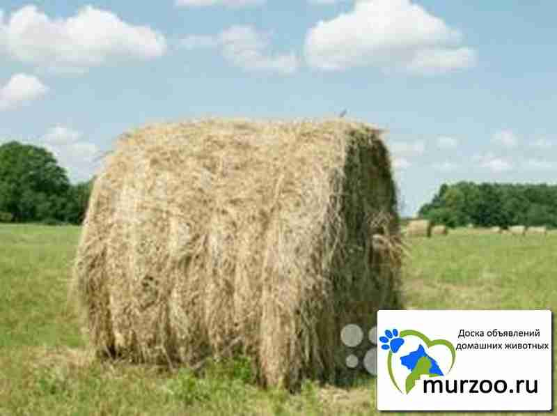 продажа сена в тюках хакасия можно