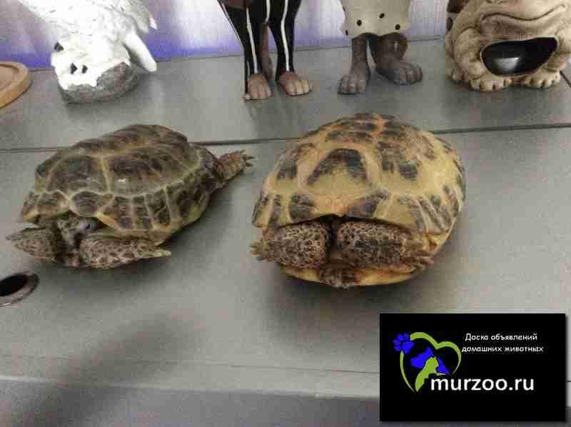 Куда можно отдать черепах красноухих в москве
