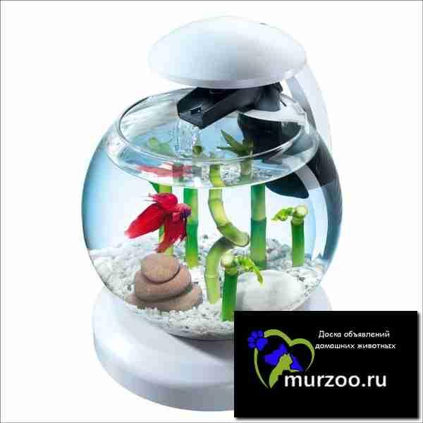 сериал аквариумы и рыбки в спб официальный сайт