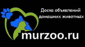 Доска объявление - продажа домашних животных