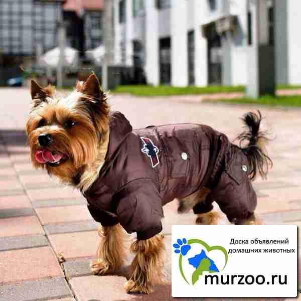 Летняя одежда для собак алиэкспресс